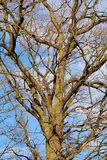 The branches Royalty Free Stock Images