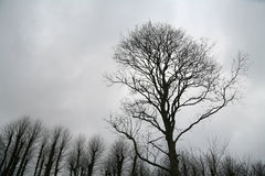 Branches Royalty Free Stock Image