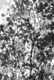 Branches. Some branches in black and white Royalty Free Stock Images
