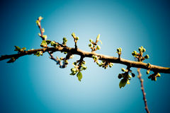 Tree branch. A branches and a perfect sky as background Royalty Free Stock Photo