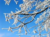Branches Stock Photos