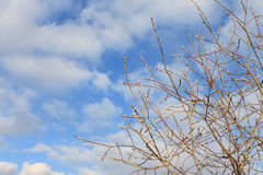 Branches Image stock