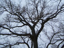Branches. Tree branchs royalty free stock image