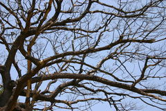 Branches. Of the big tree stock image