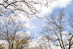 Branches. Tree branches royalty free stock image