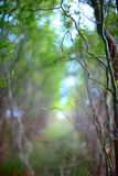 Branches abstraction. Alley in the woods. abstraction of branches royalty free stock photos