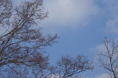 Branches against the blue sky. Stock Photo