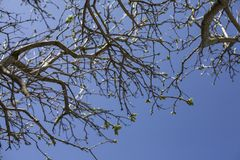Branches against a blue sky, bright sunny day. This image shows some branches against a blue sky. It was taken on a bright sunny day in spring 2018 Stock Photos