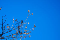 Branches against the sky Stock Photos