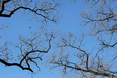Branches against the  sky Royalty Free Stock Photography
