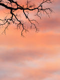 Branches against sunrise sky Stock Photo