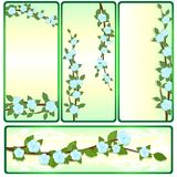 The branches of an apple-tree-1. Branch of apple blossoms. Collection of banners on a colored background Royalty Free Stock Photography