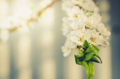Branches of apple trees with white flowers/Sunny day. Beautiful Orchard. Springtime. Spring flowers stock image