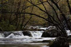 Branches arching over water flowing over rocks in late afternoon. Horizontal aspect stock image