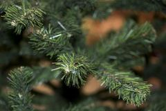 Branches of artificial spruce stock photos