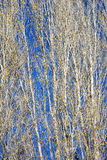 Branches of aspens Royalty Free Stock Images