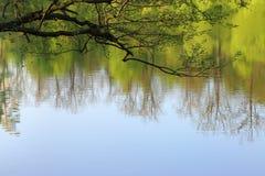 Branches au-dessus du lac Photos libres de droits