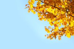 Branches with autumn leaves against blue sky on sunny day. Space for text stock images
