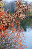 Branches with autumn leaves on the background of river Stock Images