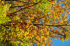 Branches and autumn leaves Stock Photo