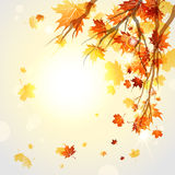 Branches with autumn leaves Royalty Free Stock Photos