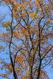 Branches of autumn tree. Stock Photos