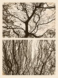Branches in autumn Royalty Free Stock Photos
