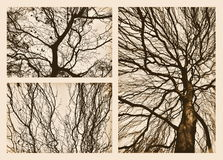 Branches in autumn Royalty Free Stock Photo