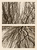 Branches in autumn Royalty Free Stock Images