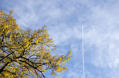 Branches of autumn trees with yellow and red leaves, cloudy blue. Sky and a contrail of a plane in a sunny day Stock Image