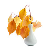 Branches with autumn yellow leaves in the vase Stock Photos