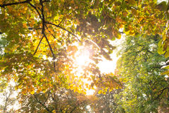 Branches and autumnal leaves against the sunlight Royalty Free Stock Photos