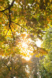 Branches and autumnal leaves against the sunlight Stock Photos