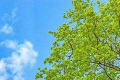 Branches avec des feuilles de ressort photographie stock libre de droits