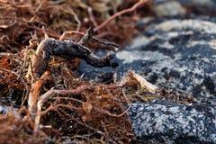 Branches avec des images images stock