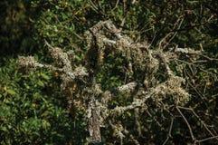 Branches avec des lichens sur un chemin de saleté à travers la forêt photo libre de droits