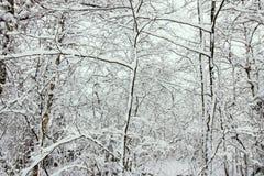 Branches avec la neige dans une forêt nordique photographie stock libre de droits