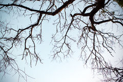 Branches (background) Royalty Free Stock Photography
