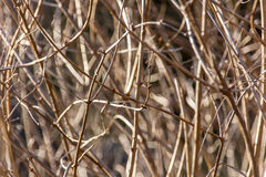 Branches background Royalty Free Stock Image