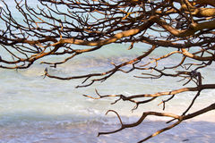 Branches bald tree. Against water Stock Photo
