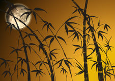 Branches of a bamboo. On a background of light of the moon Royalty Free Stock Image