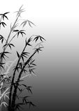 Branches of a bamboo Stock Image