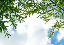 The branches of bamboo against  sky insunlight Royalty Free Stock Photo