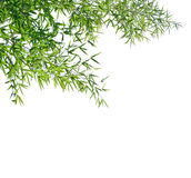 Branches of a bamboo isolated on white background. Royalty Free Stock Photo