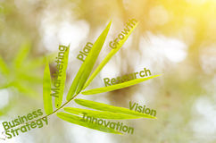 Branches of bamboo leaf as a mind map concept Stock Photos