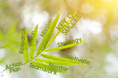 Branches of bamboo leaf as a mind map concept Royalty Free Stock Image
