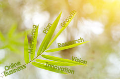 Branches of bamboo leaf as a mind map concept. Business, successful, achievement, goal, growth concept Royalty Free Stock Photo