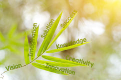 Branches of bamboo leaf as a mind map concept Royalty Free Stock Photography