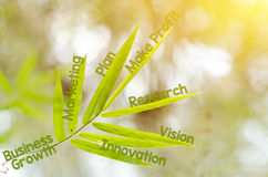 Branches of bamboo leaf as a mind map concept. Business, successful, achievement, goal, growth concept Royalty Free Stock Photography