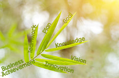 Branches of bamboo leaf as a mind map concept Stock Photo